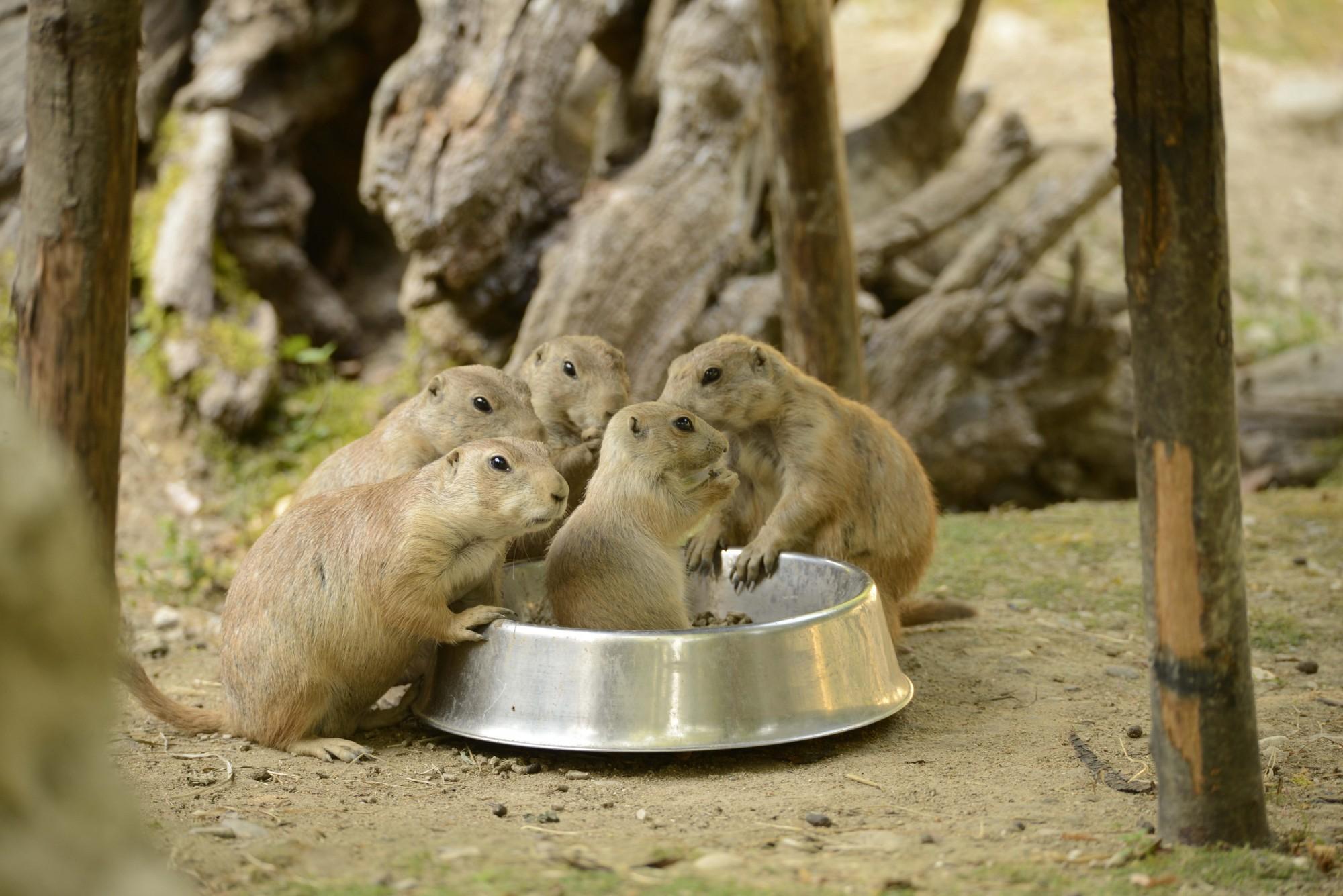 2017-otto-giu12-cane-prateria-13-cucciolo-ciotola-famiglia-cibo-1.jpg