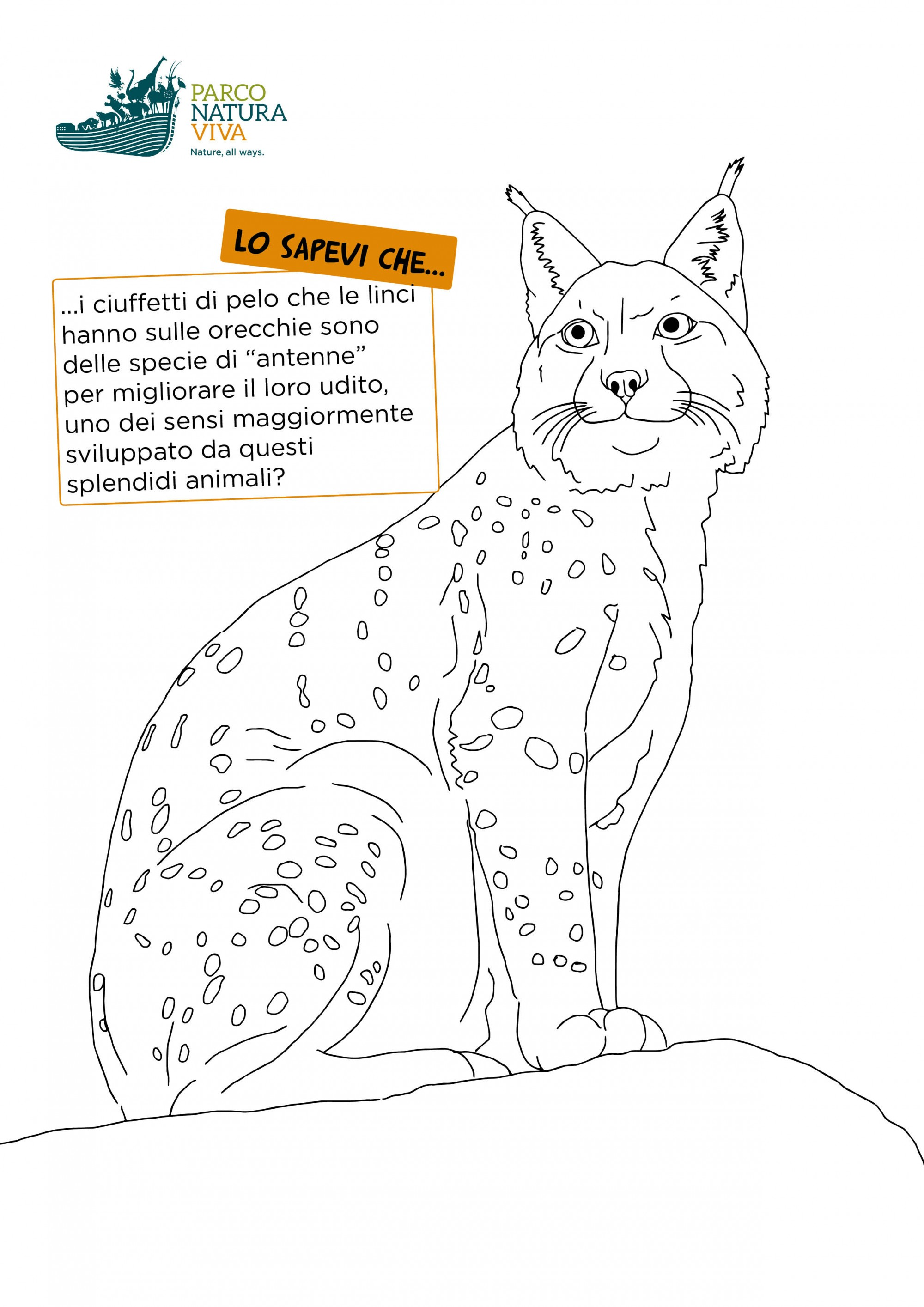 disegno-lince.jpg