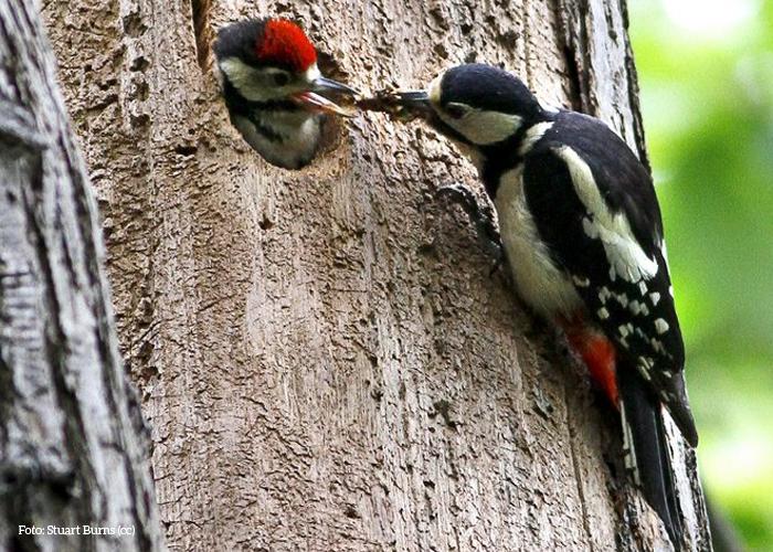 Nido parco natura viva for Il nido del picchio