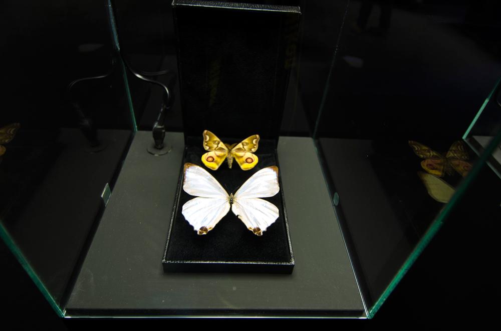 gioielli-a-6-zampe-stefano-dal-secco-1.jpg
