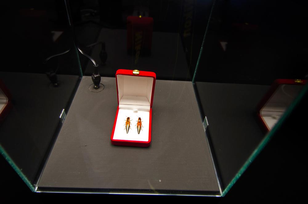 gioielli-a-6-zampe-stefano-dal-secco-2.jpg