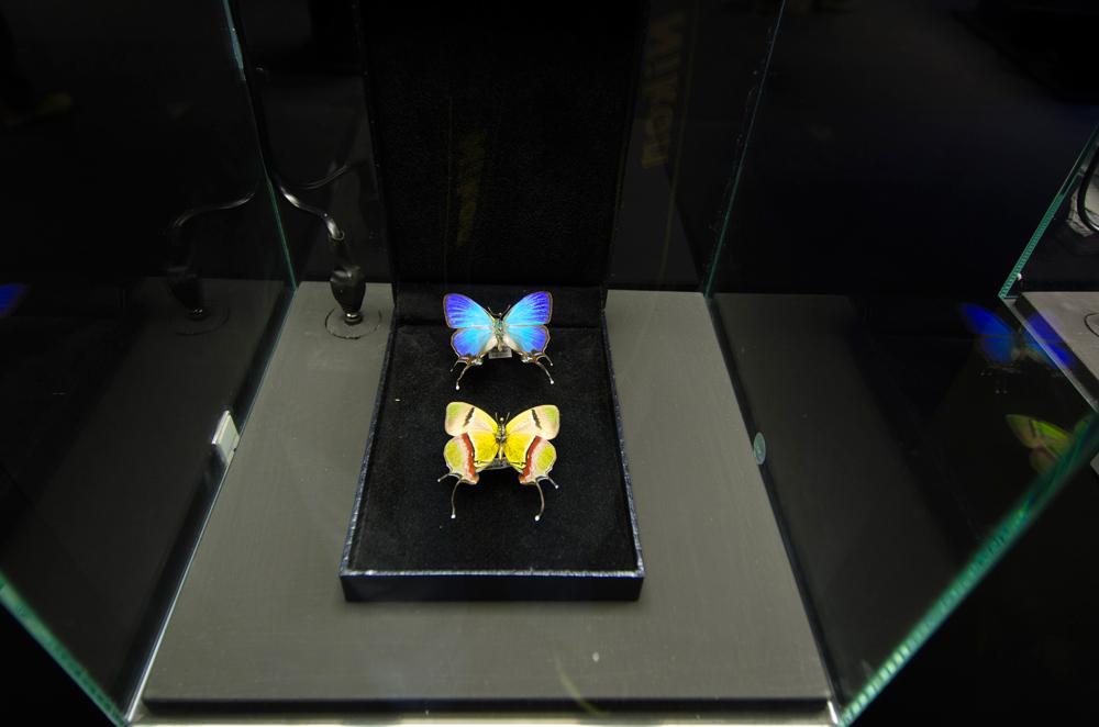 gioielli-a-6-zampe-stefano-dal-secco-31.jpg