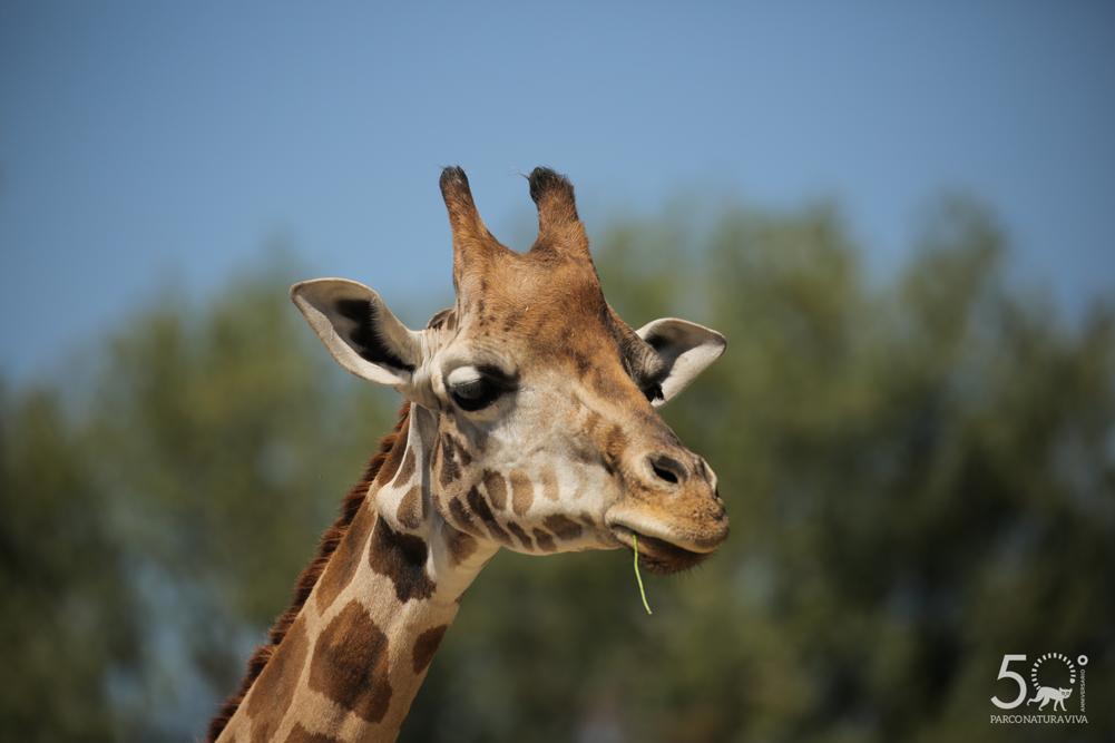 giraffa-24072019-2.jpg
