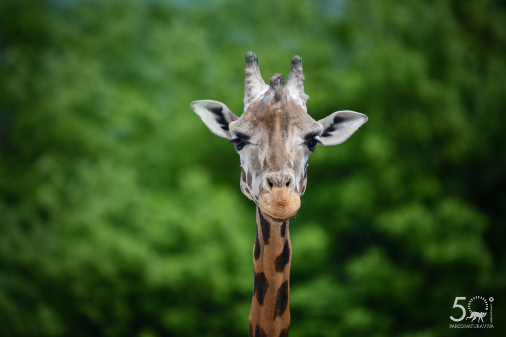 giraffa-24072019-3.jpg