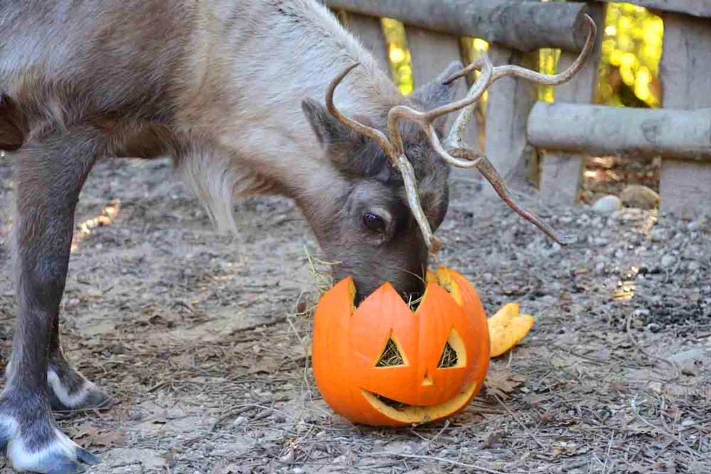 halloween-renna.jpg