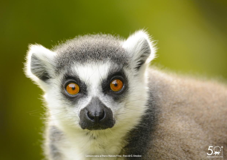 lemure-catta-femmina-festa-della-donna-2019.jpg