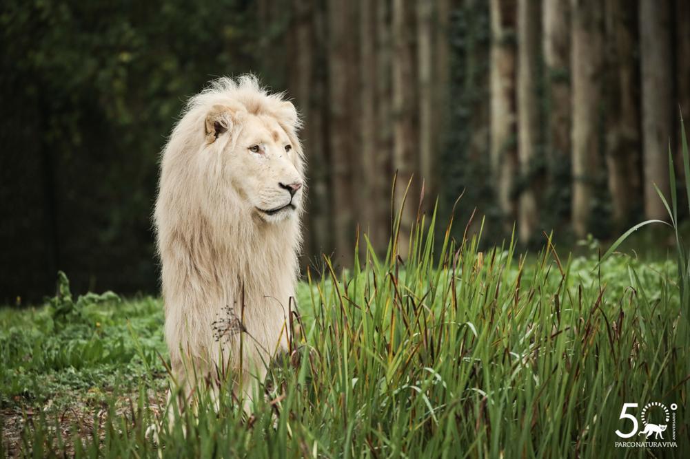 leone-24072019-2.jpg