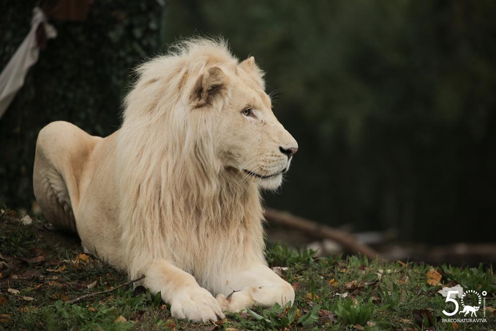 leone-24072019.jpg