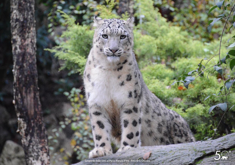 leopardo-nevi-femmina-festa-della-donna-2019.jpg