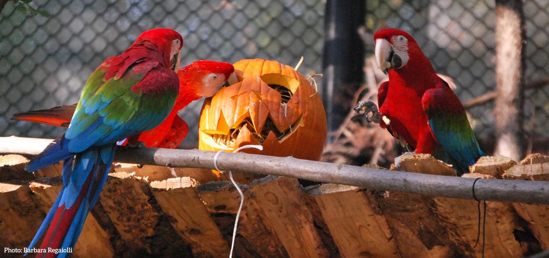 parco-natura-viva-verona-halloween-1.jpg
