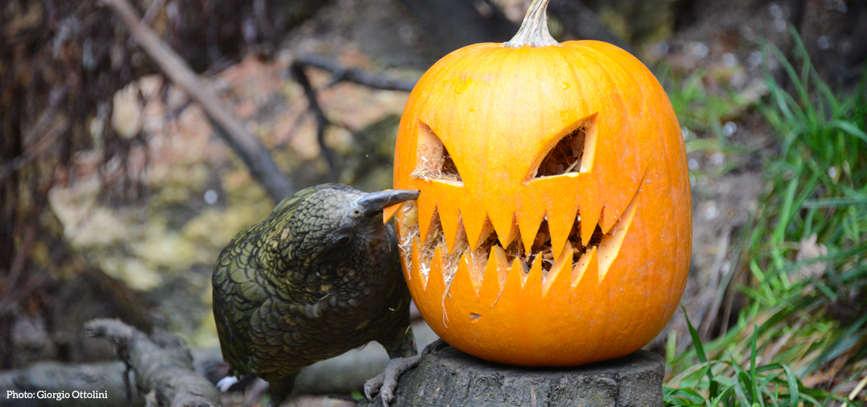 parco-natura-viva-verona-halloween-2.jpg