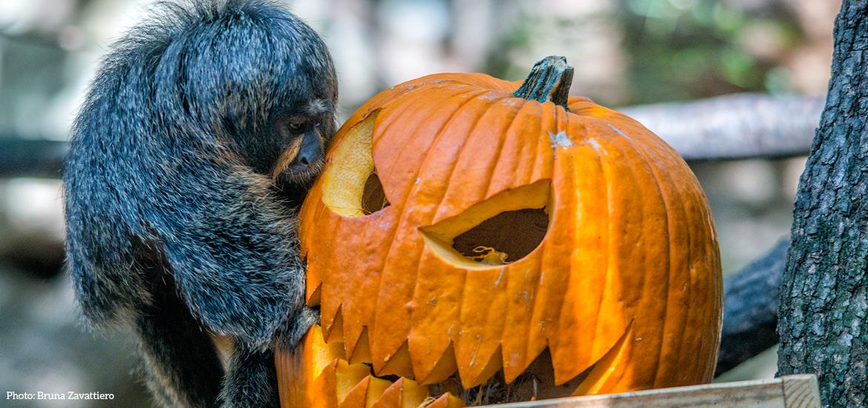 parco-natura-viva-verona-halloween-8.jpg