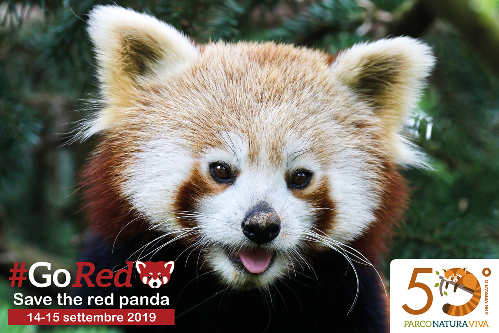 red-panda-day-cartolina-2019-3.jpg