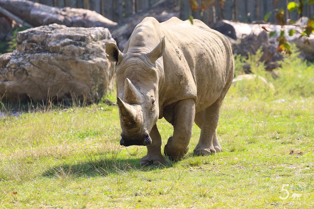 rinoceronte-24072019.jpg