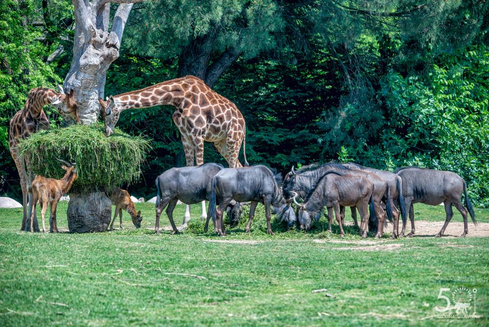 safari-24072019.jpg