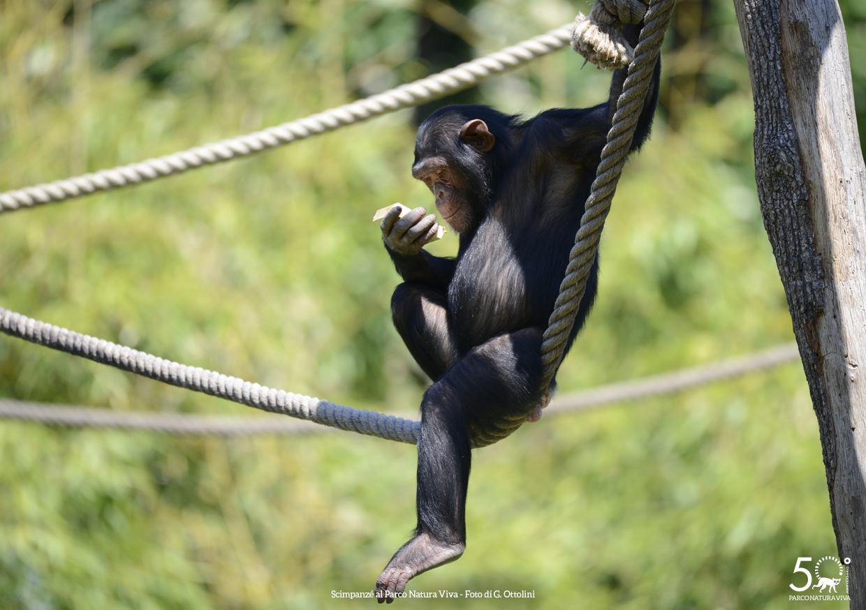 scimpanze-2-femmina-festa-della-donna-2019.jpg