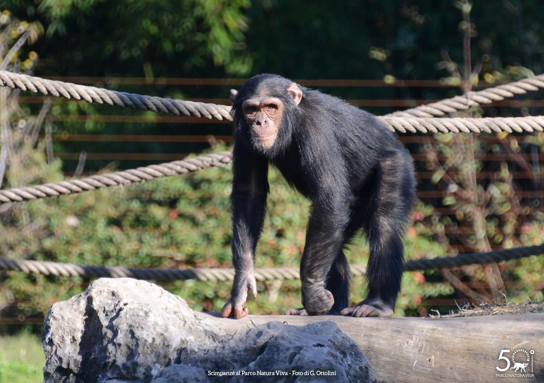 scimpanze-femmina-festa-della-donna-2019.jpg