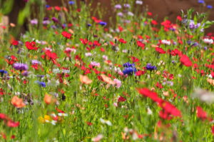 wildflowers-1-zepplin-zoo-rostock-300x199.jpg