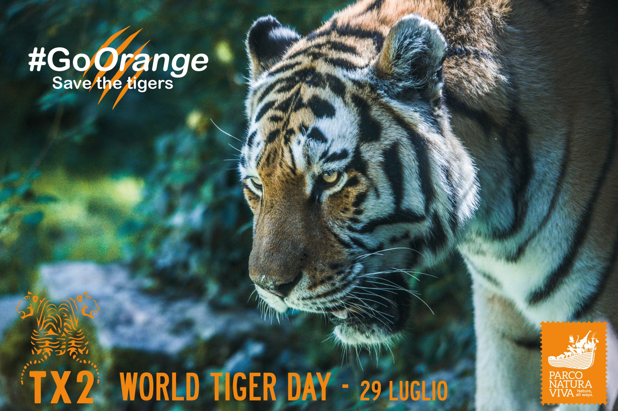 world-tiger-day-facebook-2.jpg