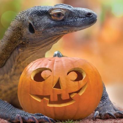 Venerdì 1 - Speciale Halloween