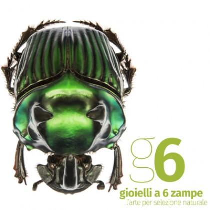 Domenica 7 - Gioielli a 6 zampe