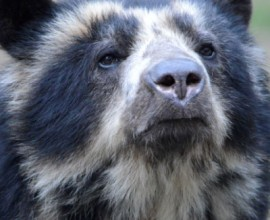 Keeper per un giorno - Crisocioni e orsi