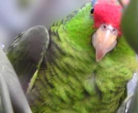 Sabato al Parco: Keeper per un giorno – Amazzoni