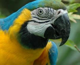 Keeper per un giorno: pappagalli