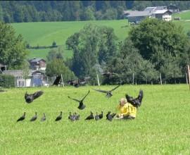 Sesta e ultima tappa - IV migrazione ibis eremita