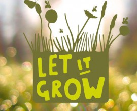 Il Parco va al Muse - Let it grow week 2017