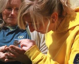 Ibis eremita, i 31 pulcini per la prossima migrazione