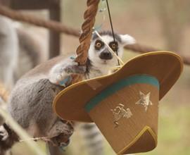 Mascherati di natura: Colori e facce del martedì grasso animale