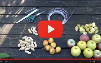 Costruisci le mangiatoie per gli uccellini - Episodio 2 - Preparazione