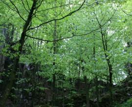 Domenica 8 -  le foreste