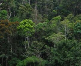 2002 Rainforest