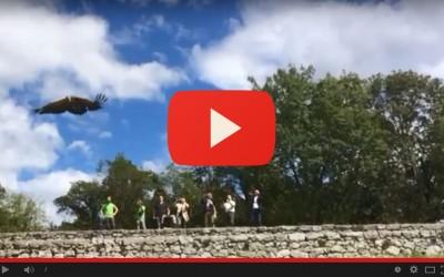 Giornata degli avvoltoi, salvato e rimesso in libertà il grifone Martin