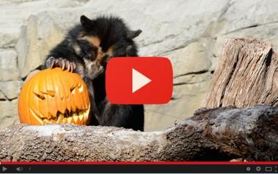 Halloween goloso per gli animali del Parco