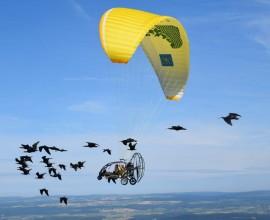 La conservazione delle specie a rischio estinzione