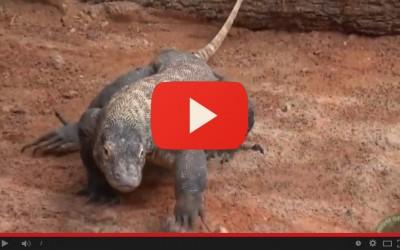 Le ultime cinque isole del drago di Komodo - convegno ricerca