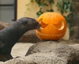 Lontre giganti e draghi di Komodo festeggiano Halloween