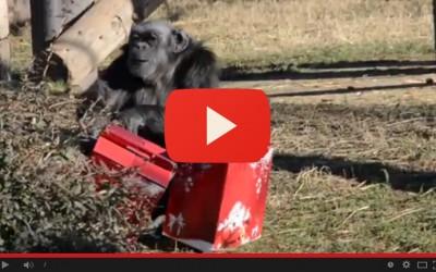 Ancora regali di Natale da scartare per gli animali del Parco Natura Viva
