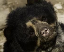 Keeper per un giorno: orsi e uistitì faccia bianca