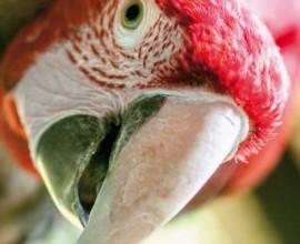 Keeper per un giorno - pappagalli ara