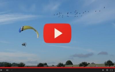 IV migrazione guidata dall'uomo per gli ibis eremita