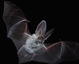Progetto Pipistrello