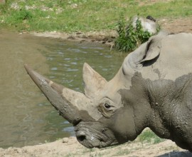 Rhino Project
