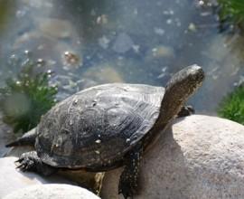 2005 shellshock campagna tartarughe
