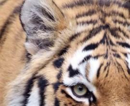 #goOrange per il Tiger day