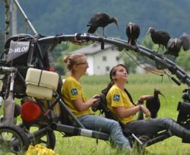 World Migratory Bird Day 2017